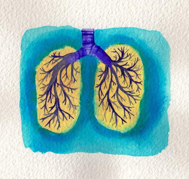 rebecca_098263_lungs
