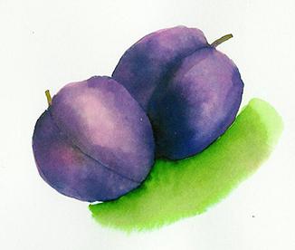 rebecca.033697.plums72