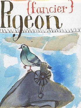 Pigeon {fancier}