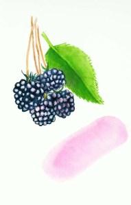 rebecca_044361_blackberries72