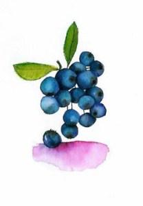 rebecca.blueberries